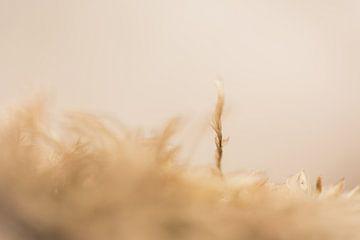 Een dromerig beige Elven landschap van Robert Wiggers