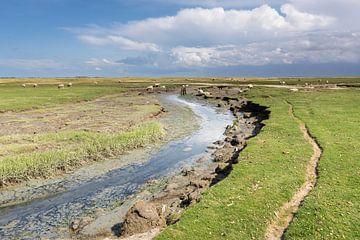 Sheeppath - Natürliches Ameland von Anja Brouwer Fotografie