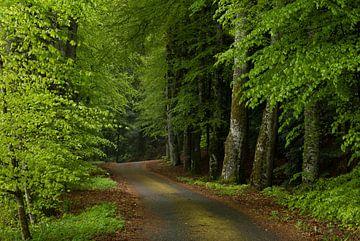 Der Weg nach Folgoux von Hetwie van der Putten