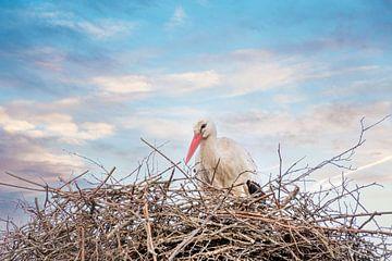 Ein Storch steht im Nest, dramatisch blauer, weißer und oranger Himmel im Hintergrund. Grußkarte ode von Gea Veenstra