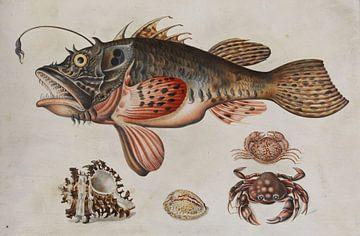 Prent van Diepzeevis, krabben en zeeslakken