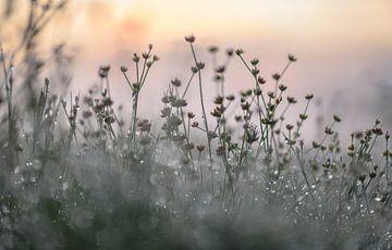 atmosphärisches Laichkraut von Tania Perneel