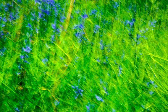 Blue Bell in Green van Hans Kwaspen