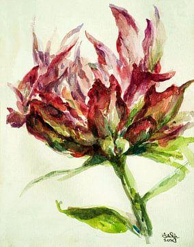 Papagei Tulpe (1) von Ineke de Rijk