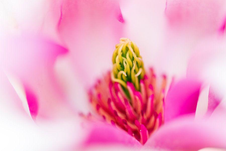 Roze Magnolia van Dennis van de Water