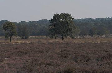 Baum auf der Regte Heide von Brigitte Jansen
