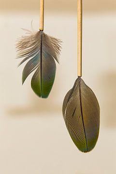 Prachtige veren, gestoken in bamboe