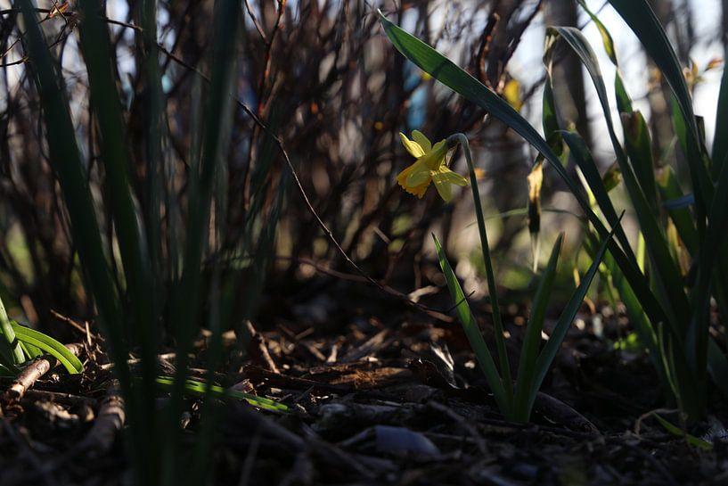Narcis in de schaduw van Hannelore