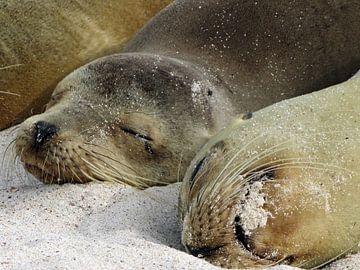zeeleeuwen op strand van Galapagos van Marieke Funke