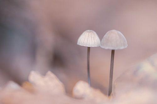 Koude pastel tinten paddenstoeltjes