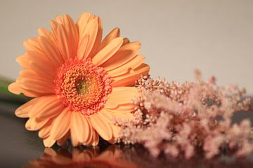 Gerbera bloem van Fotografie Sybrandy
