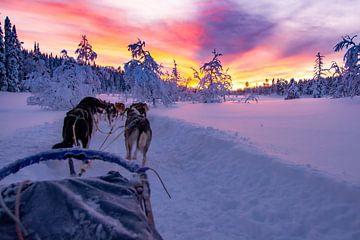 Circuit en husky avec un magnifique coucher de soleil à Salen en Suède sur Kevin Pluk
