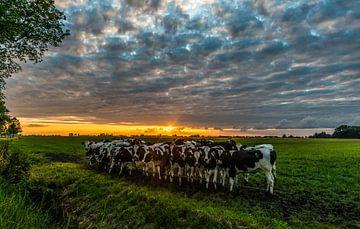 Zonsondergang met koeien von Douwe van der Leij