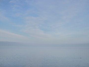 Eenzame fuut in IJsselmeer van René Piersma
