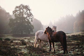 Twee Paarden Helpen Elkaar van Wahid Fayumzadah