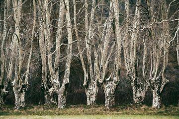 Versteckte Wälder Nr. 1 sur Lars van de Goor