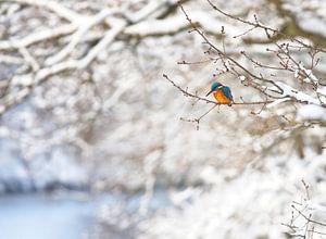Eisvogel in der Winterlandschaft