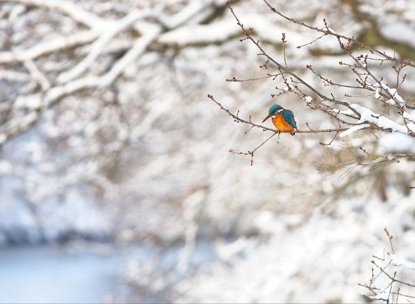 Eisvogel in der Winterlandschaft von Dirk-Jan Steehouwer