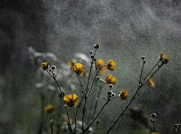 stimmungsvolle butterblumen von Tania Perneel
