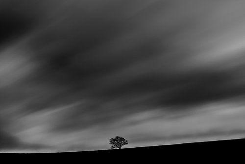 Eenzame boom tegen een stormachtige hemel. van
