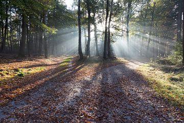 Herfst in Nederland. van Rijk van de Kaa