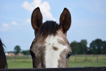 Nieuwsgierig paard van