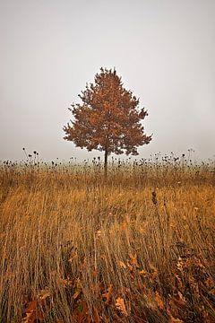 Herbstbaum von