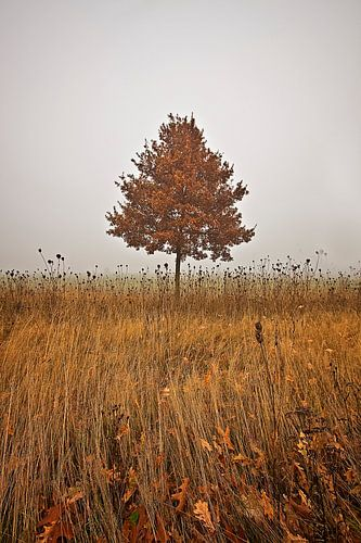 Herbstbaum von Petra Voß