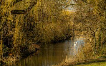 Nature dream van Irene Lommers