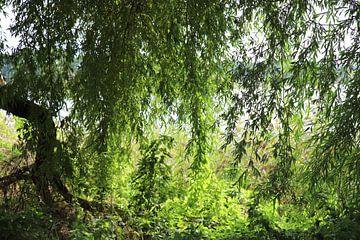 Groene boom in de zomer van Heike Hultsch
