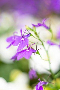 Bloemenpracht van Joke Beers-Blom