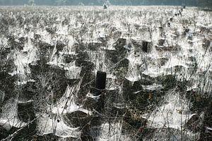 Spinnenparadijs (Stippelberg, De Rips) van