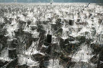 Spinnenparadijs (Stippelberg, De Rips) van John Verbruggen