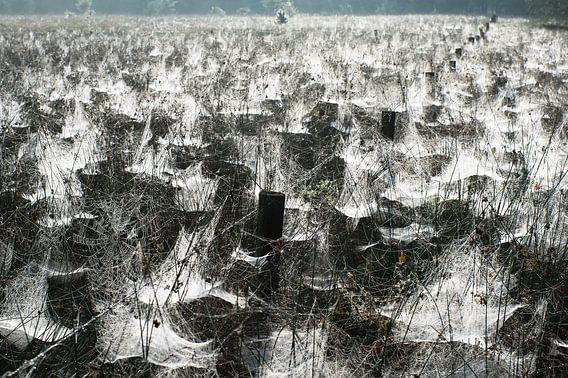 Spinnenparadijs (Stippelberg, De Rips)