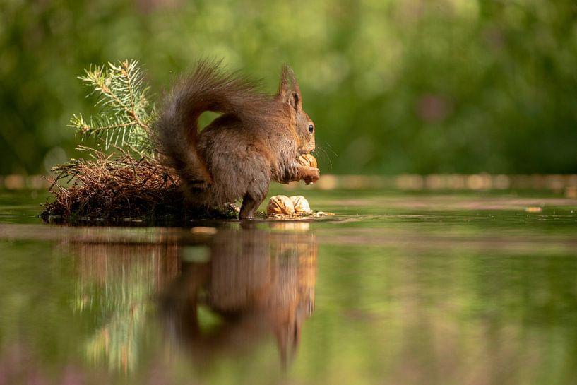 Eekhoorn met spiegeling van Tanja van Beuningen