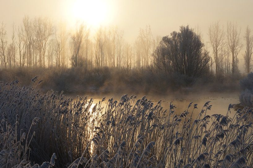 Biesbosch van Michel van Kooten