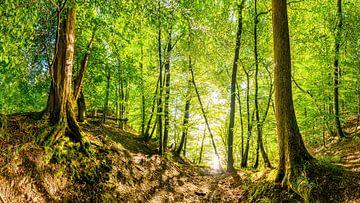 Bos in de Eifel van Günter Albers