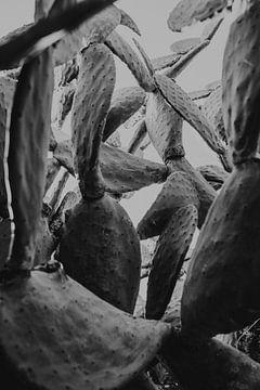 Zwartwit foto van een cactus in San Pietro Clarenza, Sicilië Italië van Manon Visser