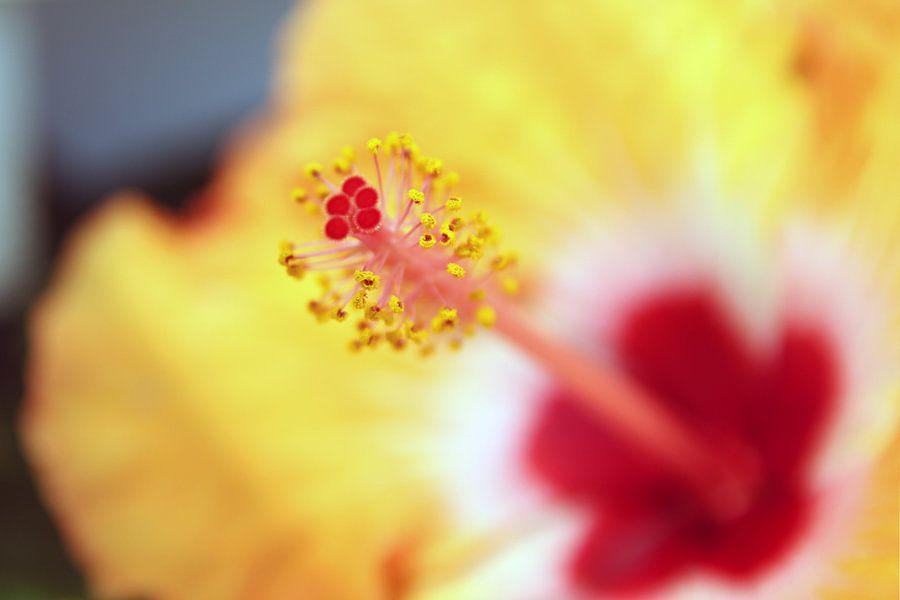 The Red Flower Pistil