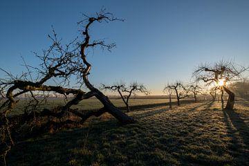 Grillige fruitbomen van Moetwil en van Dijk - Fotografie