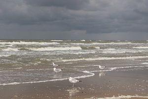 Meeuwen in Zandvoort van Dick Schouten