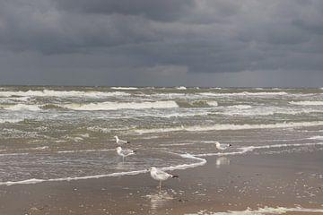 Möwen in Zandvoort von Dick Schouten