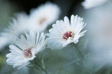 Twin flowers von Marianne Rouwendal