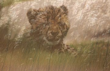 Cheeta-Welpe im Gras von Bobsphotography