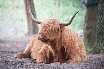 bizon van marijke servaes