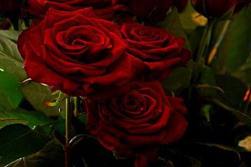 rode rozen von Jos Burger