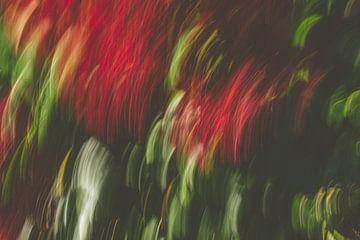donker rood van Jan Peter Jansen