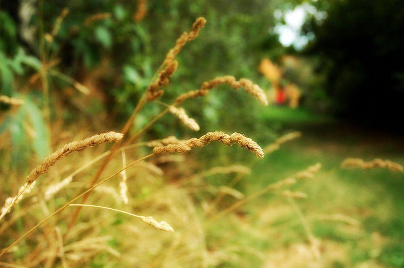 Gras in Italie van Barbara Koppe