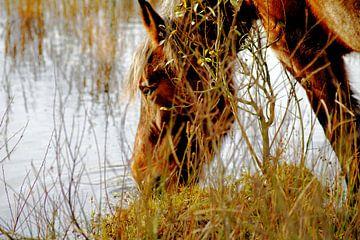 Wilde, durstige Pferde auf Schiermonnikoog von Foto Graaf Eric