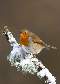 Robin im Schnee von Beschermingswerk voor aan uw muur